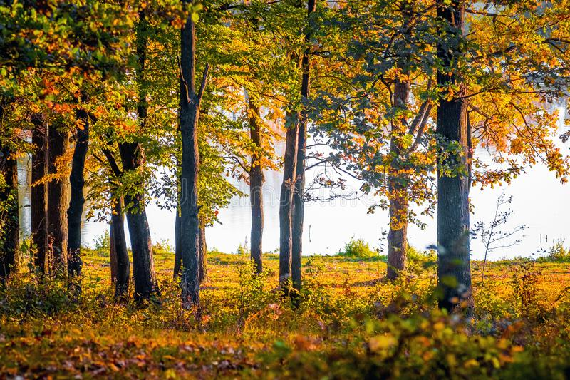 A row of colorful trees in the autumn forest on the background of the river_. A row of colorful trees in the autumn forest on the background of the river stock photography