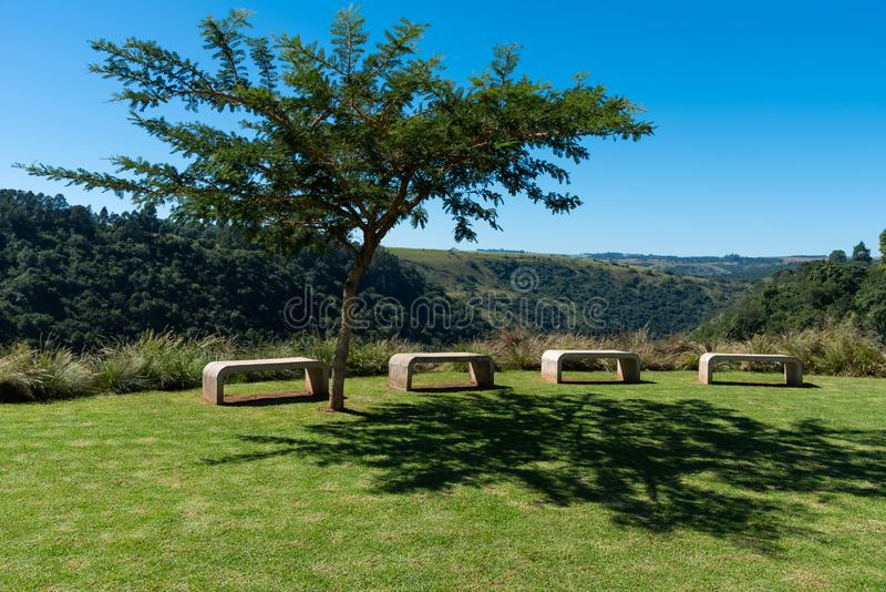 A row of concrete benches under a young acacia thorn tree royalty free stock images