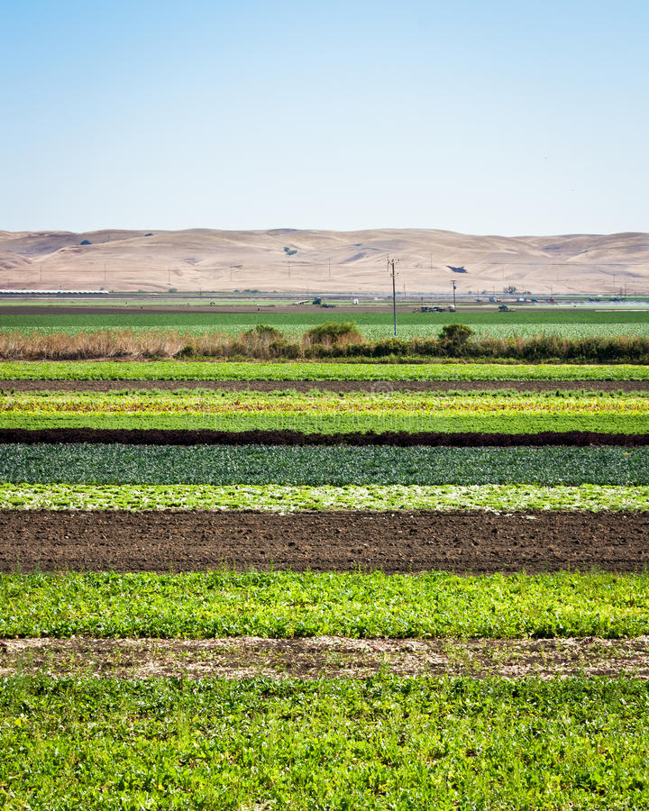 Download Row Crops stock image. Image of rural, parallel, lettuce - 26515413