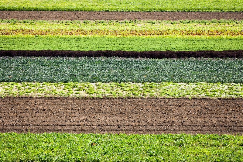 Download Row Crops stock photo. Image of agriculture, striped - 26515458