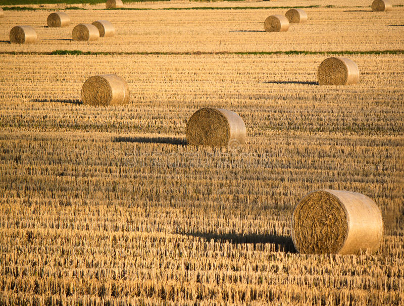 Download Row crops stock image. Image of rural, shock, harvest - 47815821