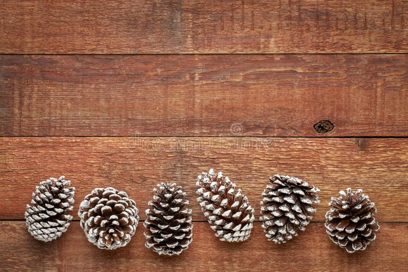 Pine cones on barn wood. Row of decorative, frosty white painted, pine cones on a weathered barn wood with a copy space stock photography