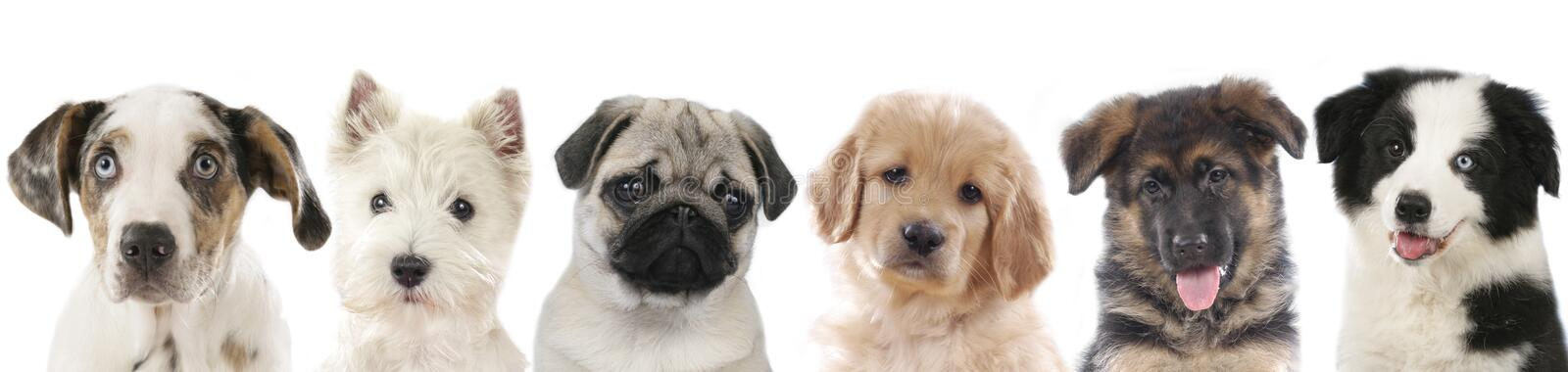 Row of different puppies, dogs stock image