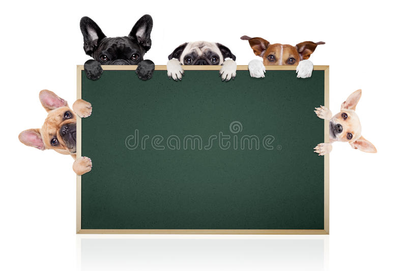 Row of dogs placard stock photo