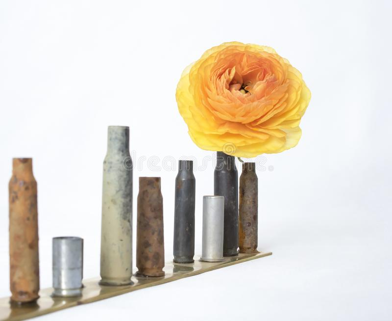 Row of Small Used Bullet Casings with Single Orange Yellow Ranunculus Flower stock photos