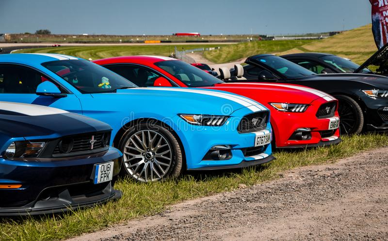 Row of Ford Mustangs. A row of modern Ford Mustangs parked on grass royalty free stock photos