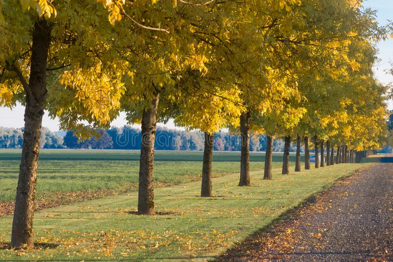 Download Autumn Driveway stock photo. Image of driveway, endless - 103089840