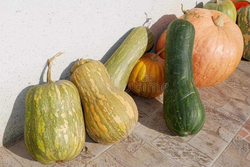 Row of gourds. Different shape and color gourds in a row in the sunlight stock photos