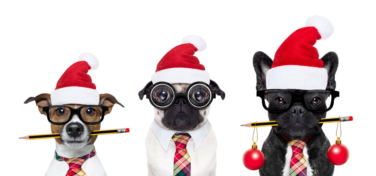 Dog office workers on christmas holidays royalty free stock image