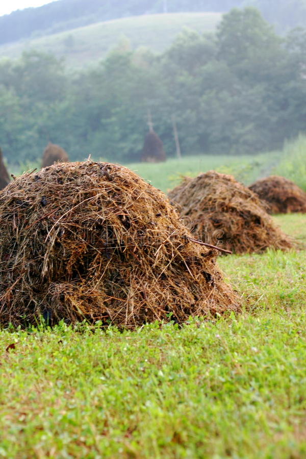Download Row of Haystacks stock photo. Image of hillside, lined - 10457434