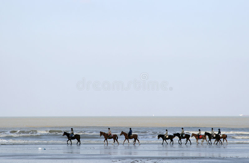 A row of horses along the sea. Horses with their riders are going through the sea-water along the North Sea coast in Belgium royalty free stock image