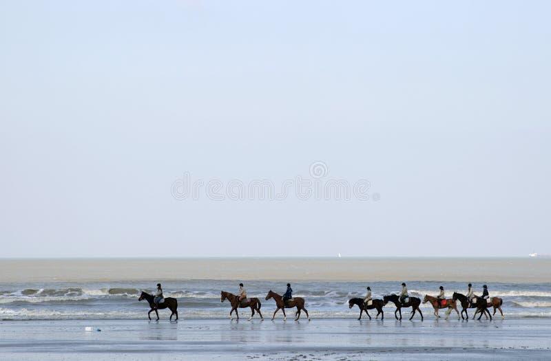 A row of horses along the sea royalty free stock image
