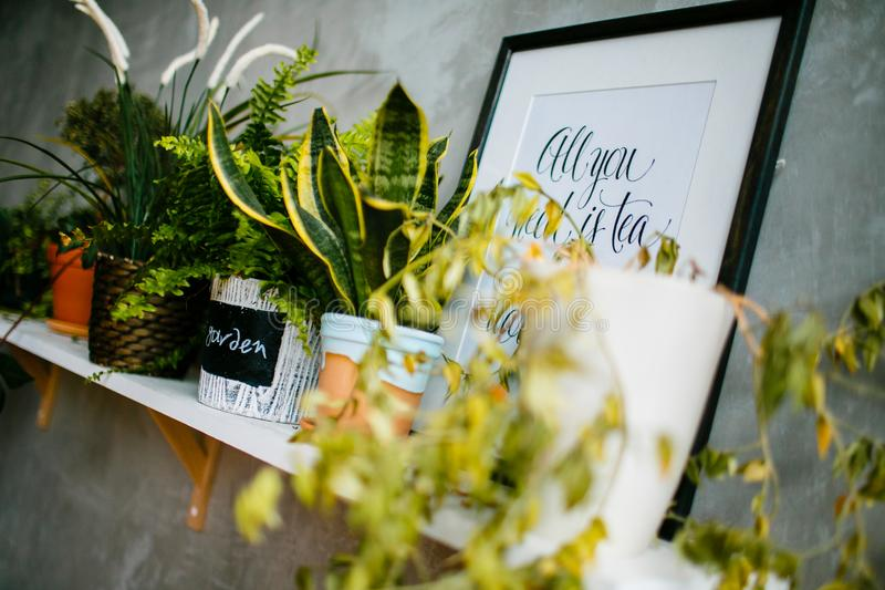 Row of houseplants in flower pots on the wooden shelf royalty free stock photography