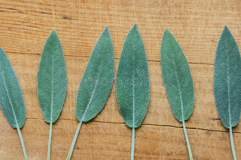 Row of leaves of freshly picked sage on rustic vintage wood board. Culinary medicinal herbs essential oil wellness. Mediterranean cuisine ingredients concept royalty free stock image