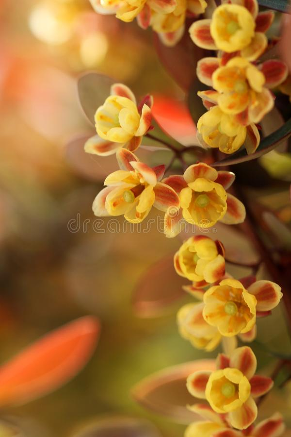 A row of little yellow flowers stock images