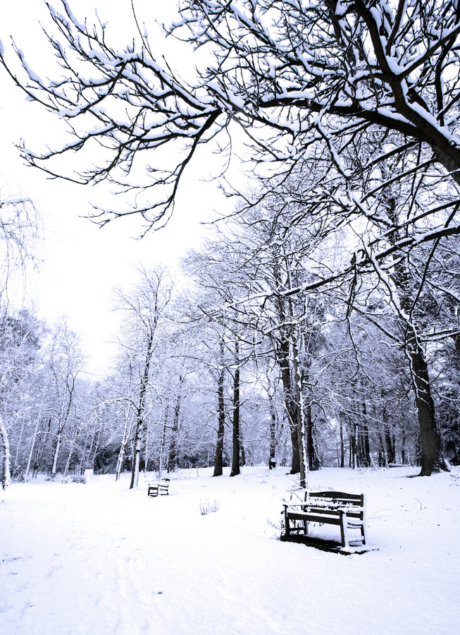 Free Row Of Benches Covered In Powdery Soft Snow Stock Photos - 1980233