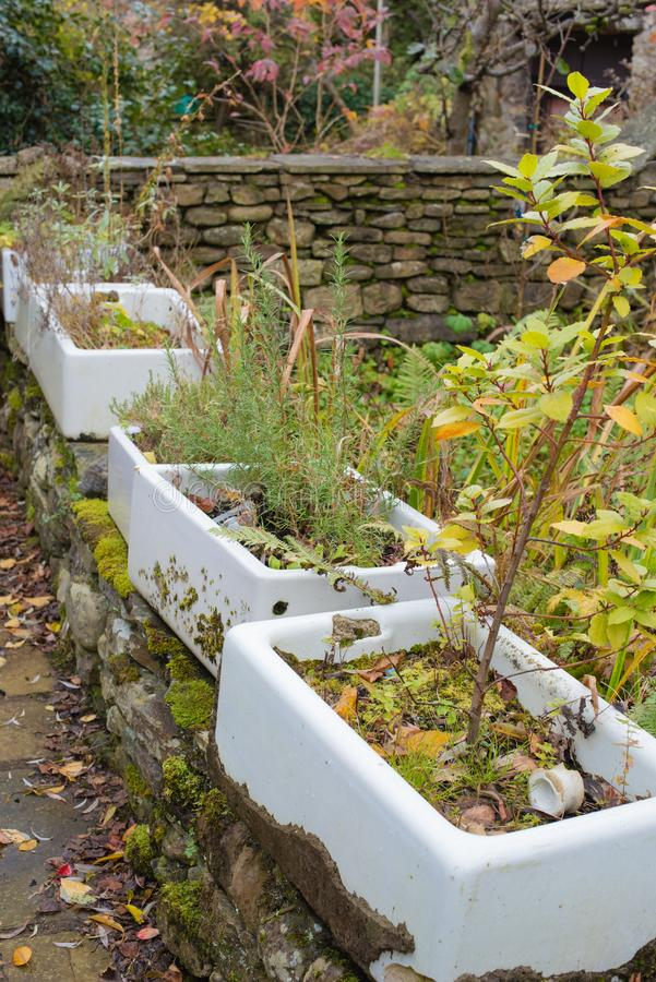 A row of old butler sinks used as planters royalty free stock photography