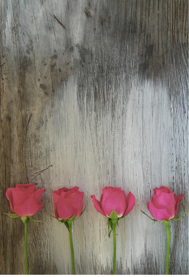 Row of pink roses. On an old wood background