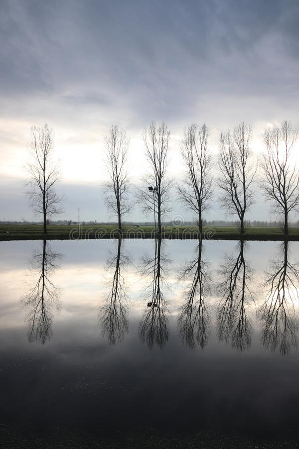 Row of poplar trees reflecting in the water of the non frozen ice court stock images