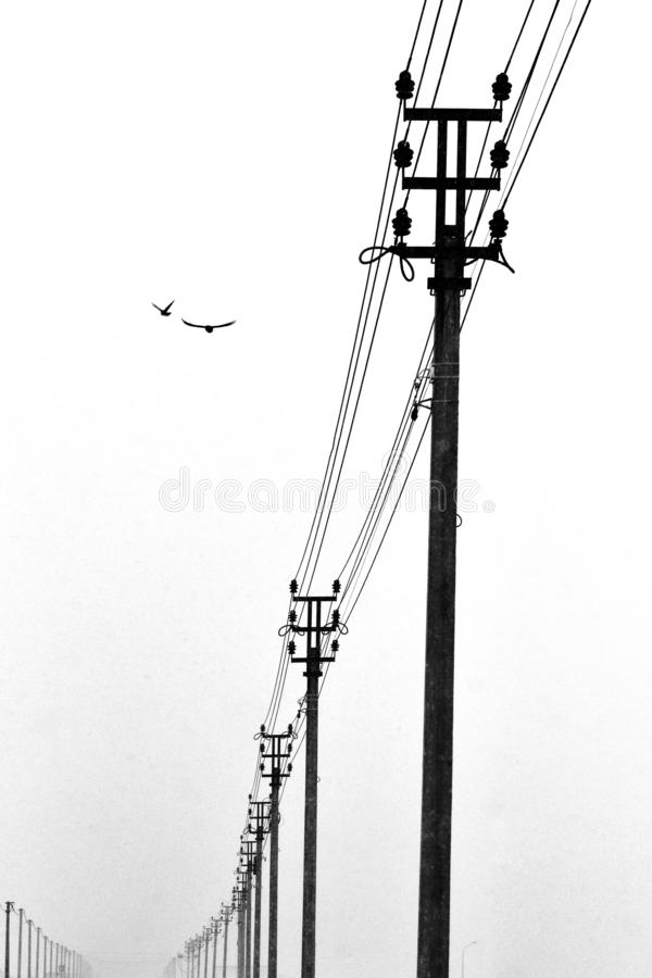 A row of power line poles and two flying birds. Black and white photo in the style of minimalism. royalty free stock photography