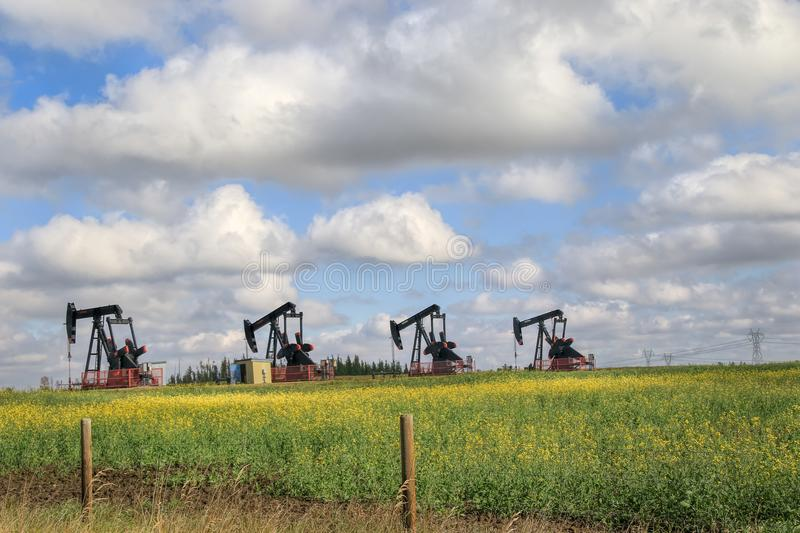 Row of Pump Jacks in a farmers field royalty free stock images