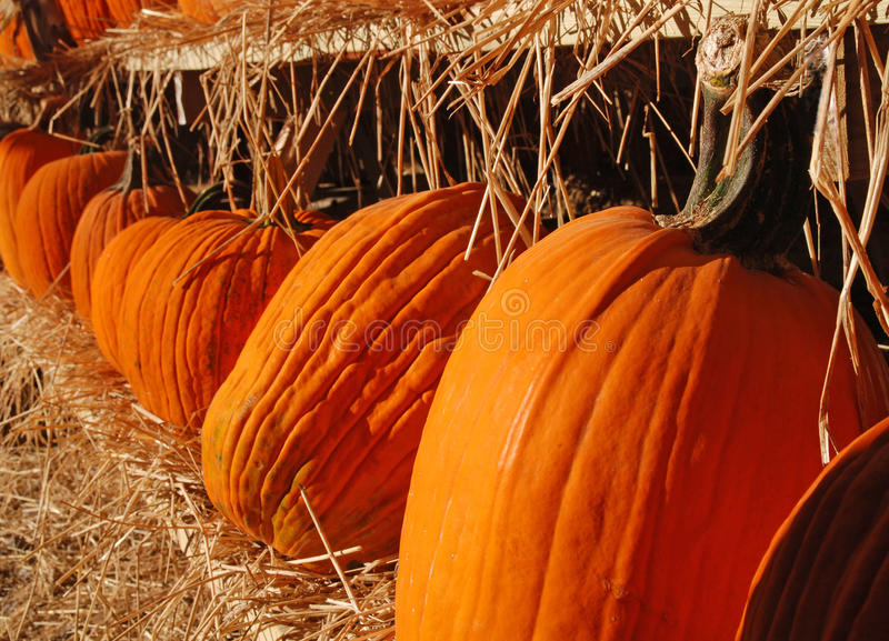 Download Row Of Pumpkins Royalty Free Stock Image - Image: 18694556