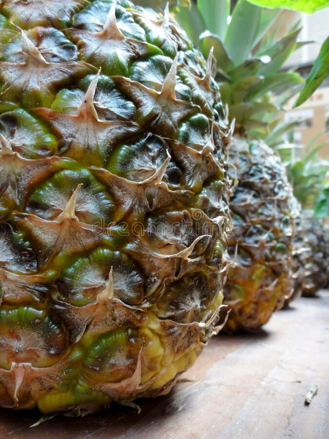 Row of ripe large juicy pineapples stock images