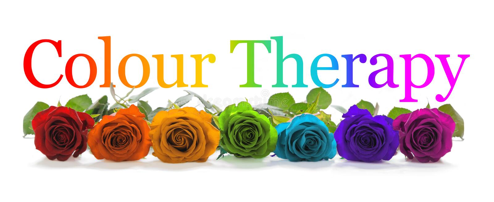 Colour Healing Therapy Rose Banner stock image
