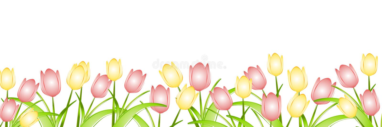 Row of Spring Tulips royalty free illustration