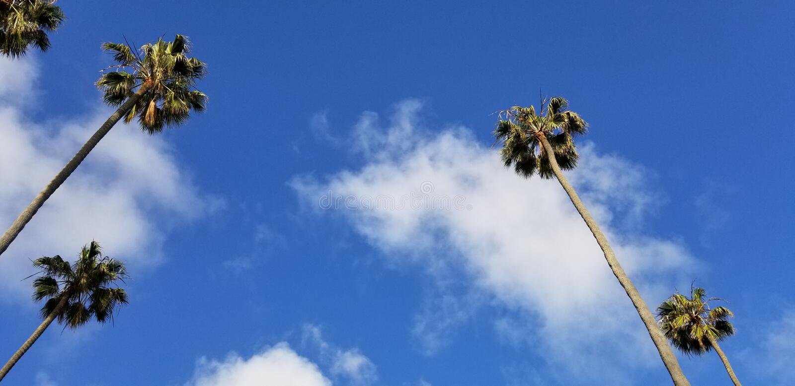Tall palms against blue sky at Southern California beach town. A row of stately king palms planted in a row along the street in a Southern California beach town royalty free stock photography