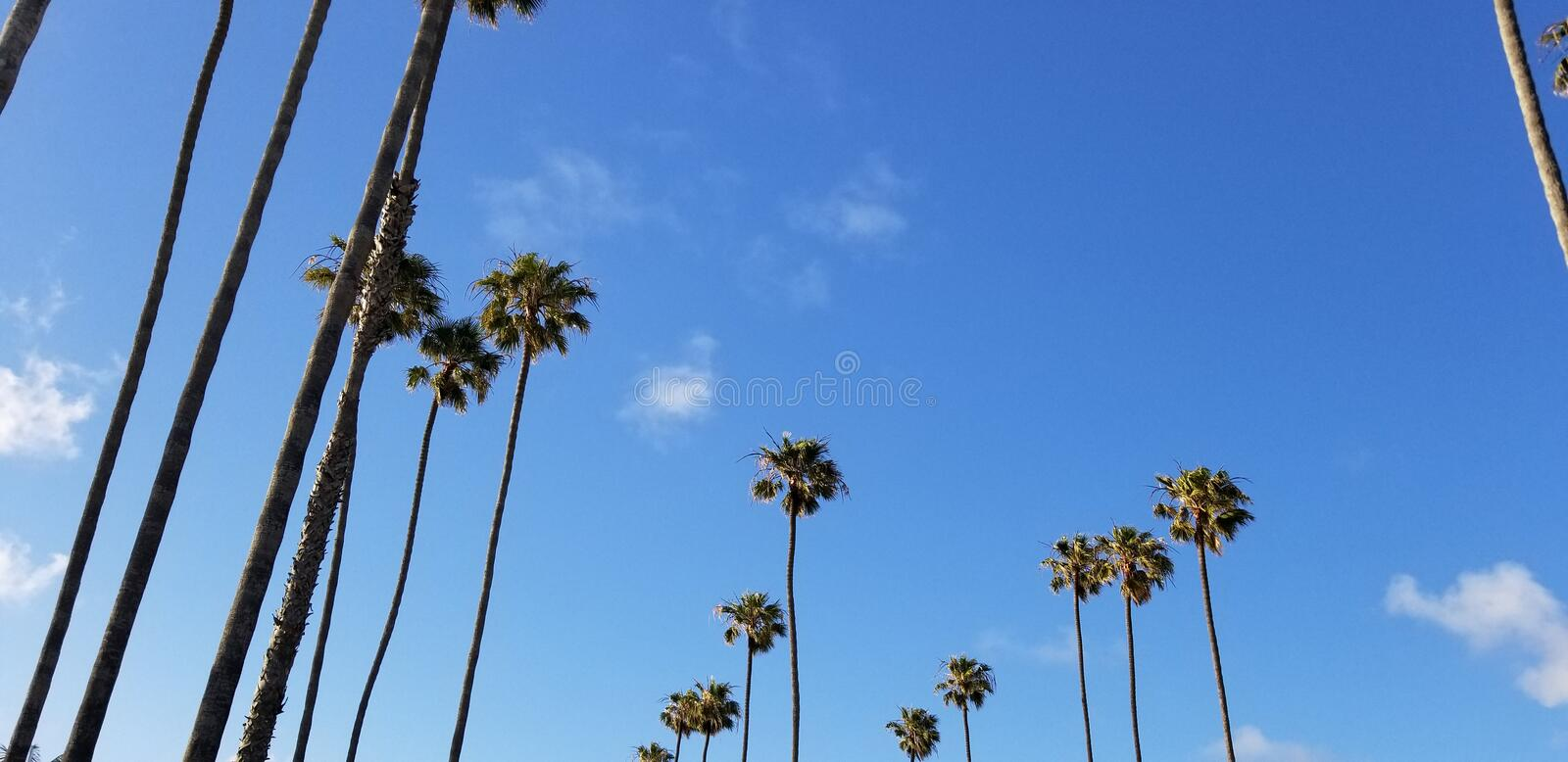 Tall palms against blue sky at Southern California beach town. A row of stately king palms planted in a row along the street in a Southern California beach town stock photography