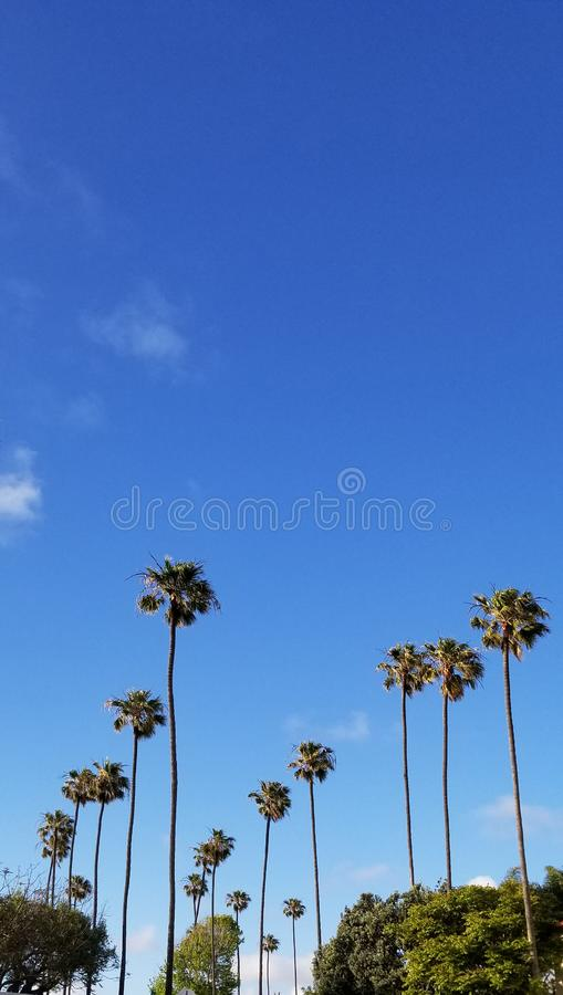 Tall palms against blue sky at Southern California beach town. A row of stately king palms planted in a row along the street in a Southern California beach town royalty free stock image