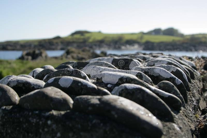 Row of stones arranged on a concrete wall stock image