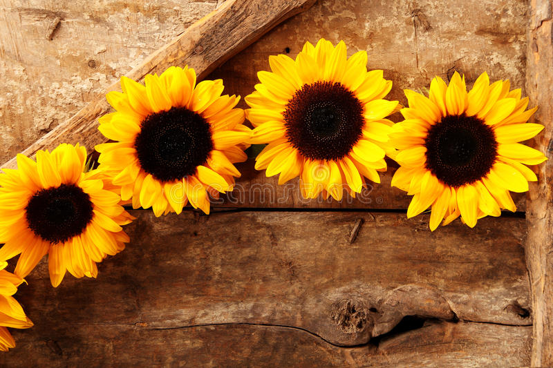 Download Row Of Sunflowers At Top Wooden Background Stock Image