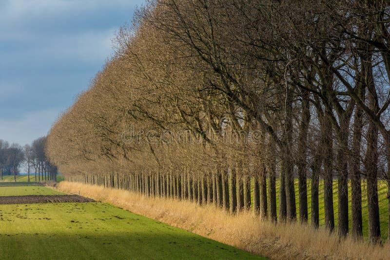 Row of trees bordering a farm field royalty free stock photos
