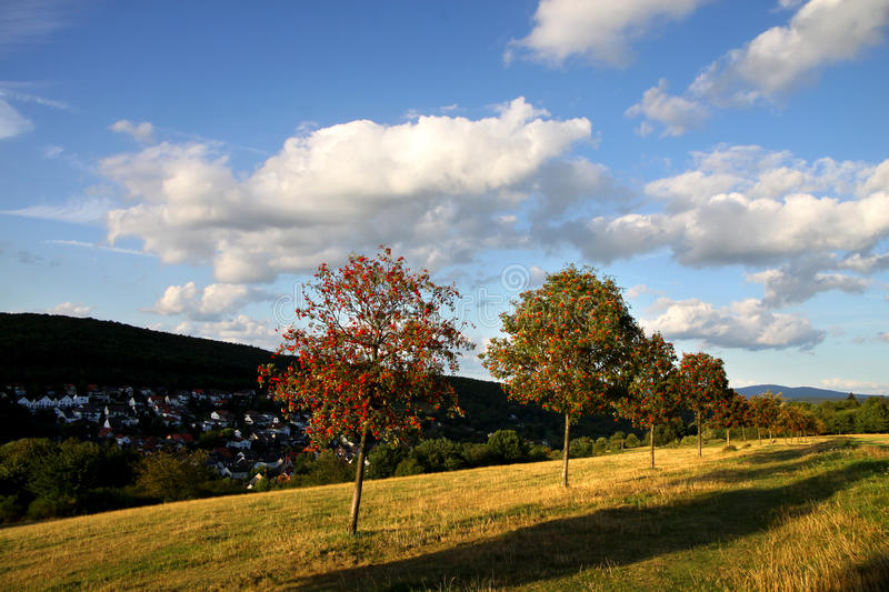 Download Row Of Trees With Evening Sky Stock Photo - Image: 17389950