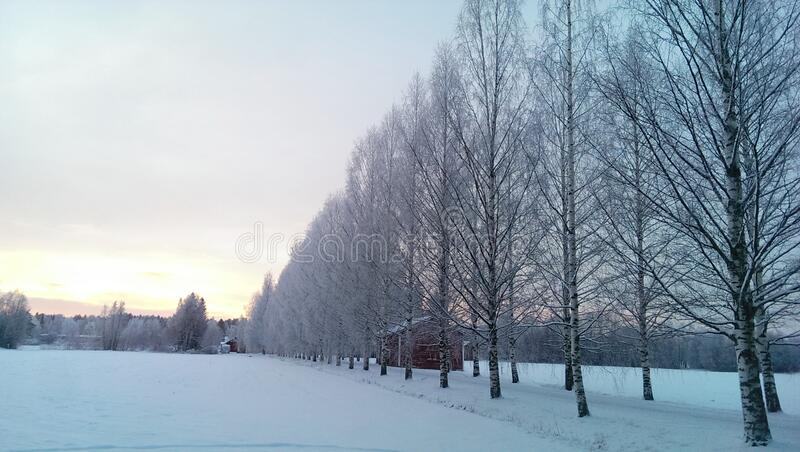 Row of trees by field in winter stock images