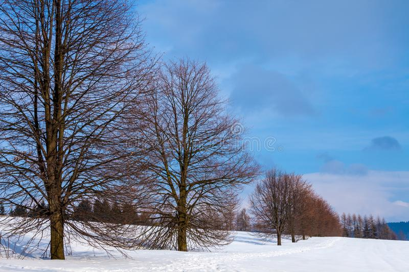 A row of trees in winter in a snow covered field stock photography