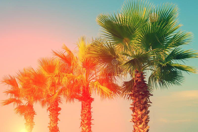 Row of tropic palm trees royalty free stock photos