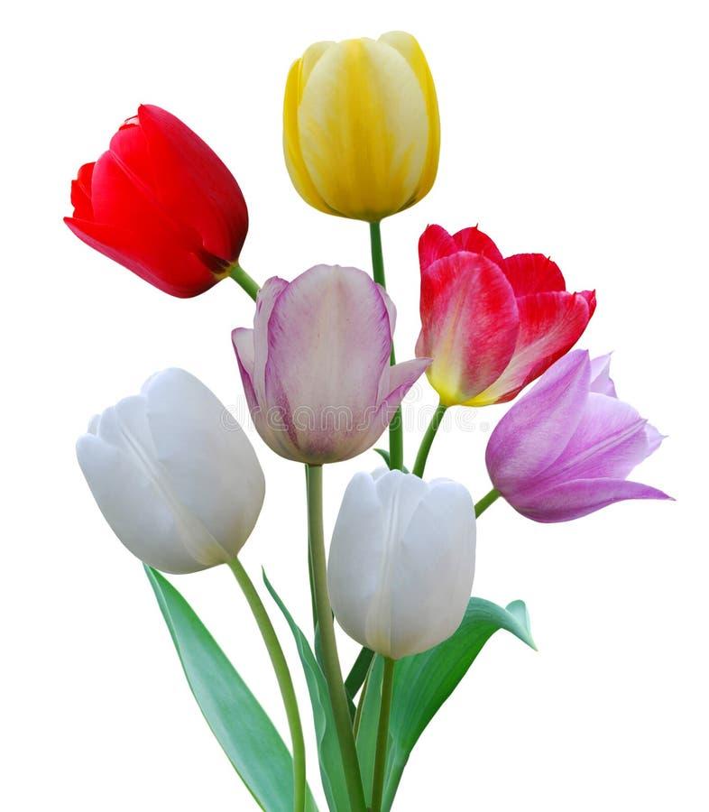 Row tulip flowers stock image