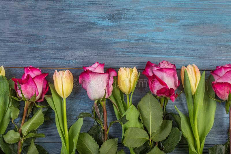 Row flowers on a blue background royalty free stock photography