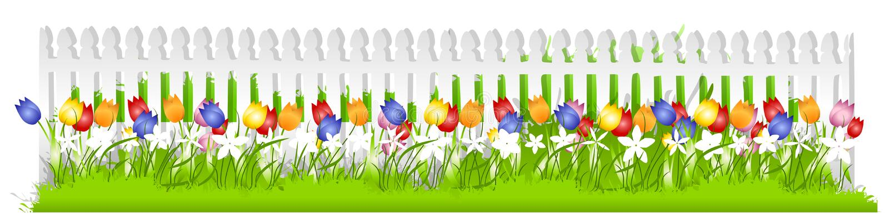Row Tulips White Picket Fence royalty free illustration