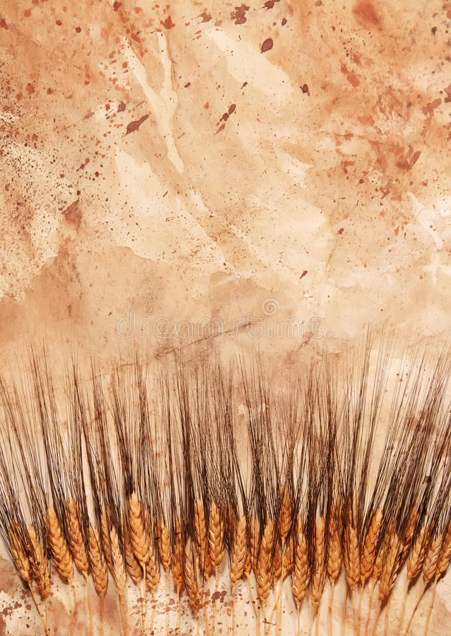 Download Row Of Wheat Royalty Free Stock Images - Image: 15889859