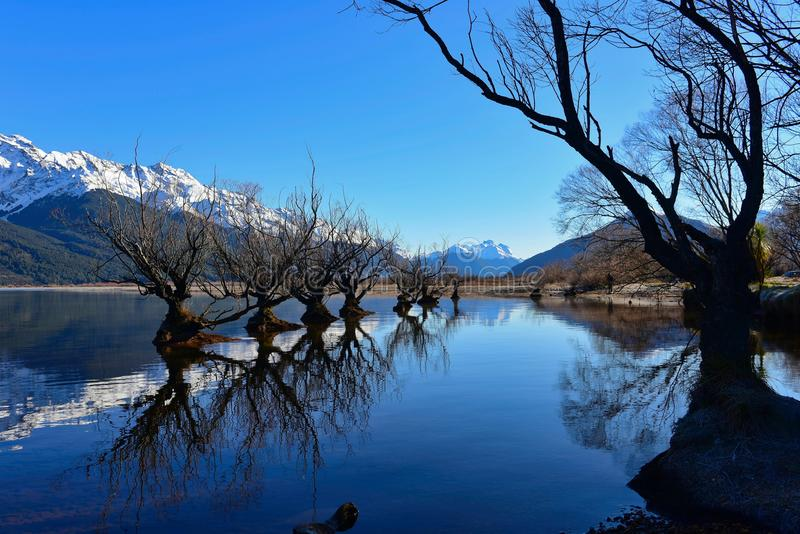 Row of willow trees on Lake Wakatipu in New Zealand. Row of willow trees on Lake Wakatipu in Glenorchy, New Zealand stock photography