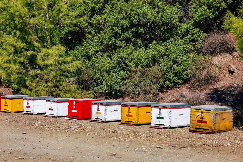 A row of wooden colorful bee hives in summertime royalty free stock photography