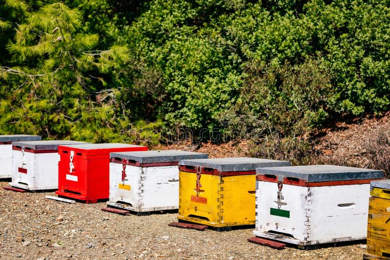 A row of wooden colorful bee hives in summertime. In Greece royalty free stock photo