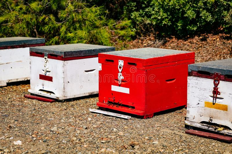 A row of wooden colorful bee hives in summertime. In Greece stock photo