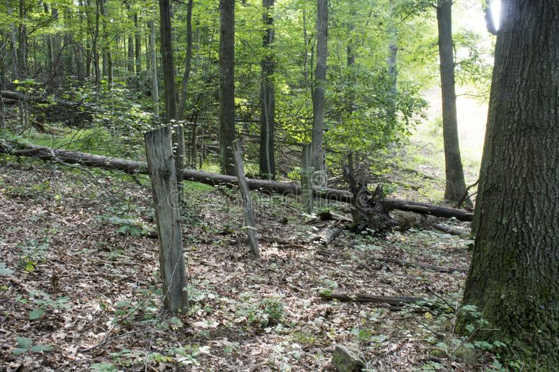Old fence line in the forest royalty free stock image