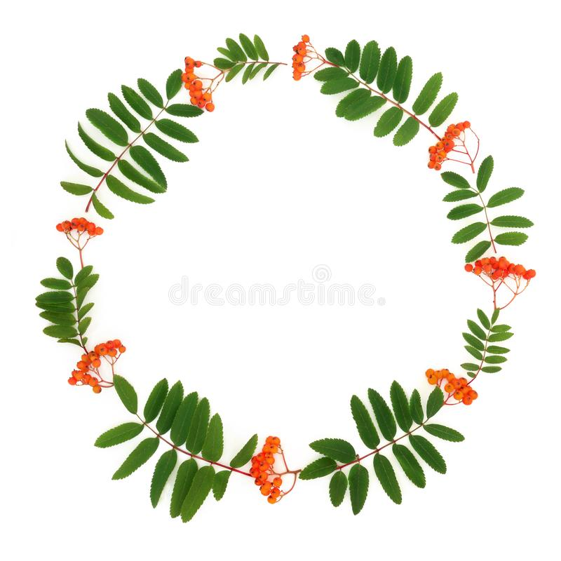 Rowan Ash Berry Wreath illustrazione vettoriale