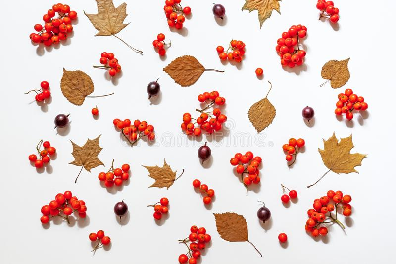 Rowan autumnal flat lay. Creative pattern made of rowan  berries flat lay, top view. autumn wallpaper  Autumn, fall concept royalty free stock photos